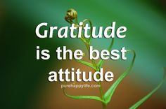 #quotes - Gratitude is the best attitude...more on purehappylife.com