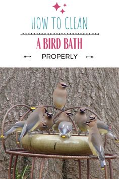 Bird bath cleaning is a must if you plan to place a bath or fountain in your garden or yard. If you are just beginning to search for the best bird bath, then baths that are made from harder surfaces like glass, ceramic, or metal are excellent choices because they are easy to keep clean. If you are a seasoned bird bath owner, then you have to check out our tips for how to clean your bird bath. Find the ratios for apple cider vinegar solutions and water and bleach solutions as well! Metal Bird Bath, Glass Bird Bath, Glass Ceramic, Bath Cleaners, Bath Water, Bird Baths, Wild Birds, Cider Vinegar, Keep It Cleaner
