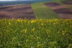 Moravian waves - Moravian colorful wavy fields