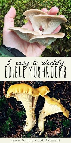Mushrooms are one of the most fun things to learn how to forage for, but it can be an intimidating and sometimes dangerous practice! Learn how to identify and forage for these wild mushrooms. Edible Wild Mushrooms, Growing Mushrooms, Stuffed Mushrooms, Mushroom Identification, Edible Wild Plants, Mushroom Hunting, Mushroom Fungi, Survival Food, Survival Prepping
