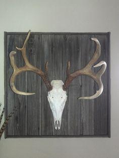 deer mount on an old barn door. Deer Skulls, Animal Skulls, Deer Antlers, Deer Mount Decor, Deer Decor, Deer Hunting Decor, Hunting Stuff, Taxidermy Decor, Taxidermy Display