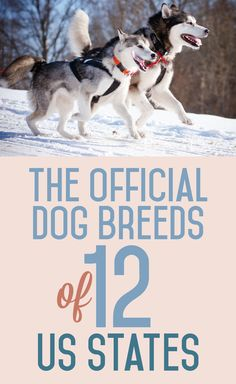 The Official Dog Breeds Of 12 US States
