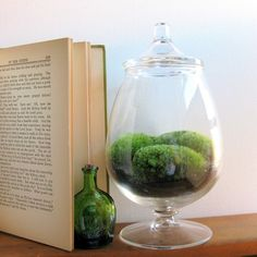 Another elegant and simple moss terrarium from Made by Mavis.   Lovely jar.