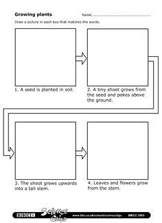 plant growth worksheets for kindergarten plant life cycles and worksheets on pinterestlife. Black Bedroom Furniture Sets. Home Design Ideas