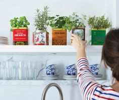 Use Tea cans for herbs on window sill