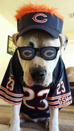 This is my kid Tank, a true Chicago Bears fan. ; )
