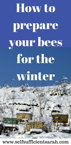 How to prepare your bees for winter