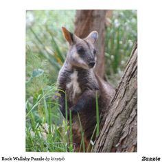 Rock Wallaby Puzzle