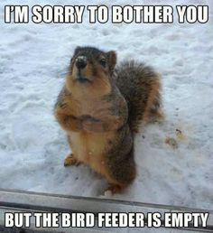 Happens every day at our house! And they even have their own squirrel feeder!
