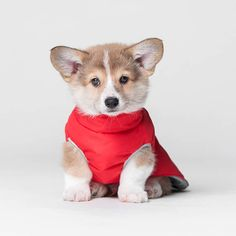 Warm jacket for puppy warm jacket for dog dog wear clothes Puppy Training Classes, Training Your Dog, Training Kit, Tumeric For Dogs, Durham, Cute Puppies, Cute Dogs, Cute Dog Wallpaper, Puppy Biting