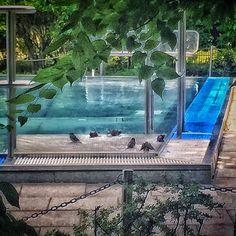 Birds taking a bath  #myknips #berlin #mitte #birds #spatz #berlinerspatzen #bath #vogelbad