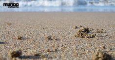 Como se formou a areia da praia?