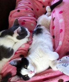My cats Prince & Princess. Amy, Denver, PA. 10/20/12.