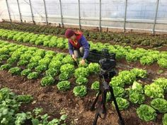 Gardener State: 2017 — Ready, Set, GROW!