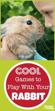 Pet Rabbits love to play games. Here a… Proper pet rabbit care includes playtime! Pet Rabbits love to play games. Here are the best ideas for DIY toys and games you can play with your bunny! Bunny Cages, Rabbit Cages, Rabbit Toys, Pet Rabbit, House Rabbit, Diy Bunny Cage, Diy Bunny Hutch, Rabbit Diet, Baby Bunnies