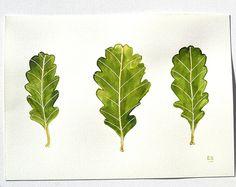 Irish Oak Leaf Malerei, Tinte Blatt zeichnen, original Blatt Kunst, Eichenblatt Natur Aquarell