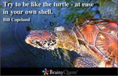 Yea! Turtle quote