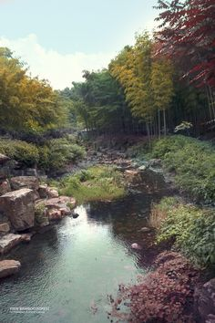 YiXin China _ Bamboo Forest
