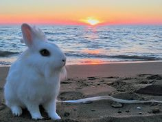 Beach Bunny at Sunrise ~ Sunset Crafts With Pictures, Good Morning Friends, Beach Bunny, My Spirit Animal, Bunny Rabbit, Easter Baskets, Coastal, Sunrise, Fun
