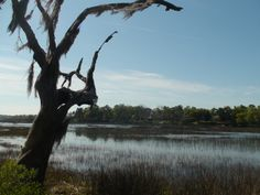 View from behind my house on Battery Creek in Beaufort, SC
