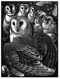 Parliament of Owls Colin See-Paynton Wood engraving