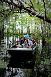 Option for a Swamp tour: Honey Island Swamp Tour