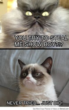 """Grumpy cat stealing the show - Funny cat looking like an angry colonel is asking the grumpy cat: """"You try to steal my show, boy? Grumpy Cat Quotes, Grumpy Cat Meme, Cat Memes, Grumpy Kitty, Grumpy Car, Kitty Cats, Funny Animal Pictures, Funny Images, Animal Pics"""