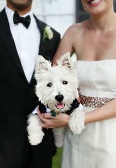 Pictures like this make me want to get a puppy pre-wedding, so we can include him or her in the festivities wedding-ideas