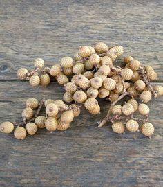 Natúr, természetes trópusi fürtös bogyó termés. Remek díszítő az őszi és téli dekorációdhoz.