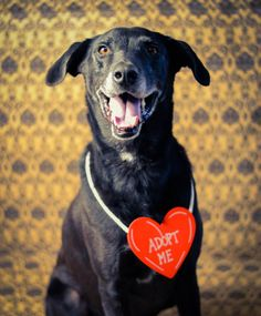 great Animal Shelter photography! What a great way to help the animals get adopted!!
