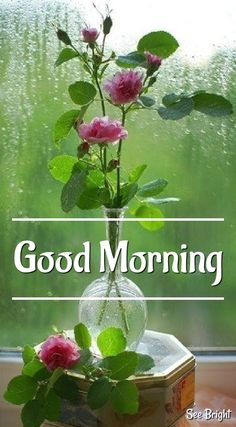 Beautiful Morning Messages, Good Morning Nature, Good Morning Roses, Good Morning Beautiful Images, Good Morning Messages, Good Morning Good Night, Good Night Qoutes, Happy Good Morning Quotes, Good Morning Greetings