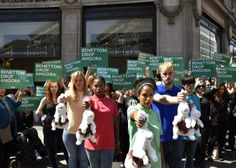 VICTORY! Benetton Bans Angora After Thousands Take Action