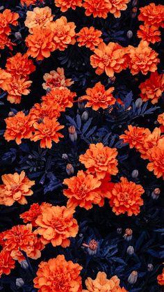 Orange Flowers Garden Free Ultra HD Mobile Wallpaper - Best of Wallpapers for Andriod and ios Flor Iphone Wallpaper, Spring Desktop Wallpaper, Hd Flower Wallpaper, Orange Wallpaper, Aesthetic Iphone Wallpaper, Nature Wallpaper, Mobile Wallpaper, Wallpaper Backgrounds, Aesthetic Wallpapers