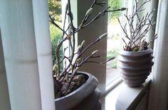 Vensterbank decoratie met kunst Magnolia takken (in knop) op een natuurlijke manier gestyled.