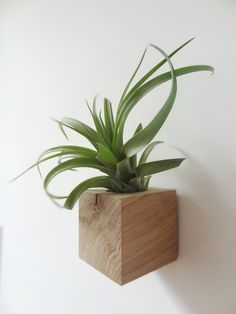 Etairnity Cube with airplant. Buy here: http://www.etairnity-airplants.com/collections/all