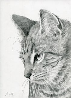 Tiger Cat by art-it-art.deviantart.com on @deviantART...Graphit, Bleistift Zeichnung auf 200 Gramm Künstlerpapier... ♥ Tiger Kitten ...original Pencil drawing ...Format: 18 x 25 cm - 7 x 10 inches