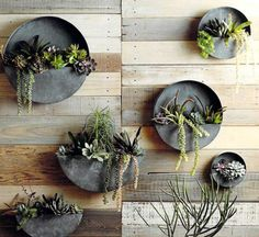 12 vasos de parede para se apaixonar pelos jardins verticais