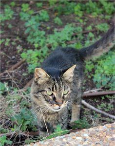 A cat in GanHair