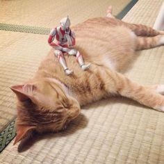 猫トラマン