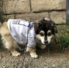 Petunias, Cutest Dog On Earth, Calum 5sos, 5sos Memes, Calum Thomas Hood, Luke Hemmings, 5 Seconds Of Summer, Dog Breeds, Cute Dogs