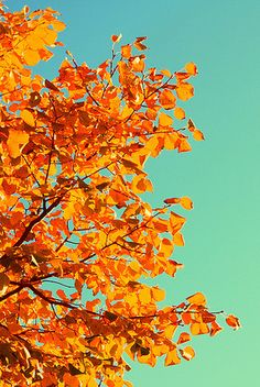 """October gave a party; the leaves by hundreds came - the chestnuts, oaks, and maples, and leaves of every name. The sunshine spread a carpet, and everything was grand, miss weather led the dancing, professor wind the band."" ― George Cooper"