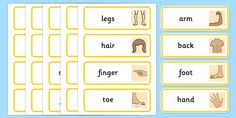Parts of the Body Topic Word Cards