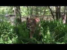 Reise Cougar Talks