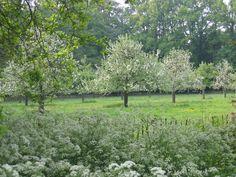 Boomgaard Renswoude Landscape Plans, Fantasy Landscape, Landscape Architecture, Landscape Design, Fleet Foxes, Pocket Park, Bulb Flowers, Apple Tree, Garden Inspiration