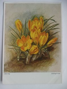 Kunst-AK: Frühlings-Krokus, von Hans Lang, Wiechmann-Bildkarte, 1938