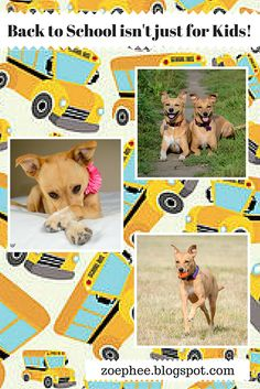 It's that time of year again! It's time for back to school and not just for kids! Fall dog classes are starting up! Do you have any Fall dog training goals for your pups? Are you enrolling them in any classes?  http://zoephee.blogspot.com/2015/09/back-to-school-isnt-just-for-kids.html