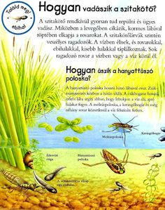 Picasa Webalbumok Bugs, Butterflies, Insects, Environment, Science, Education, School, Picasa, Animales