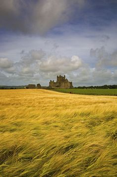 Cistercian Dunbrody Abbey lies beyond the Barley Field in County Wexford, Ireland. Founded in 1170, on the instructions of Strongbow, by Herve de Montmorency (his uncle), after the Norman invasion of Ireland. One of the finest examples of a Cistercian Monastery in Ireland.