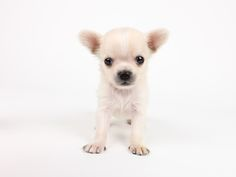 I need this doggy. And he's available now in Tokyo.