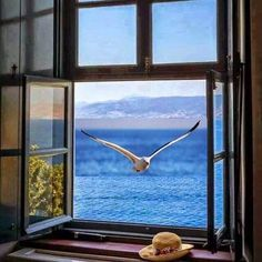 A winged visitor. Window View, Open Window, Beautiful Birds, Beautiful Places, Looking Out The Window, Through The Window, Doorway, Windows And Doors, Scenery